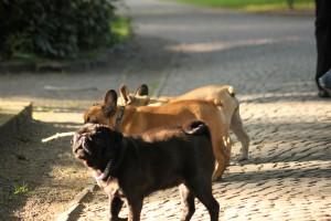 Brave junge Hunde