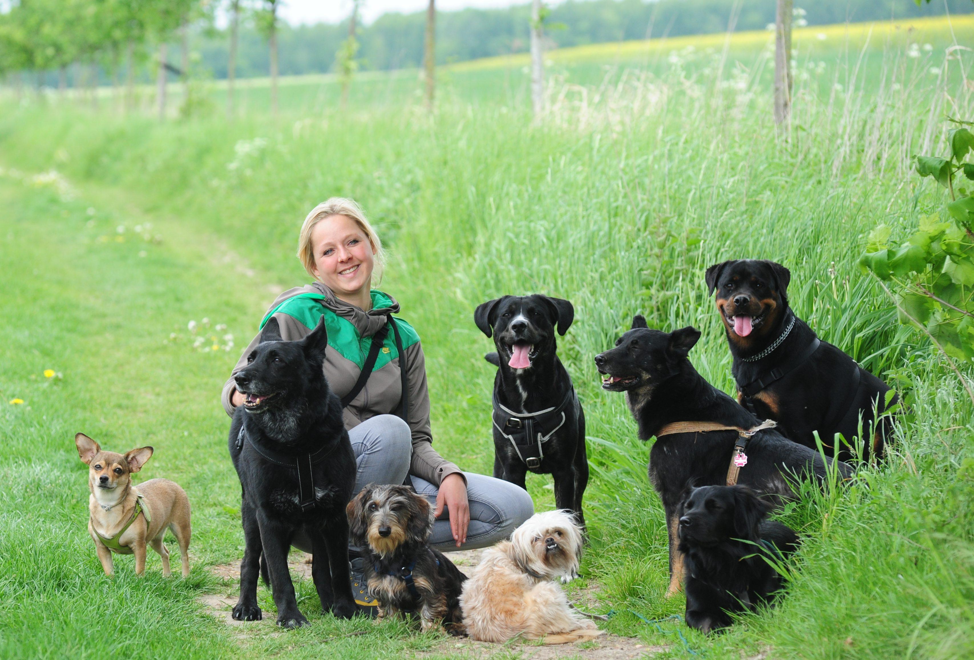 Zufriedene Kundenhunde